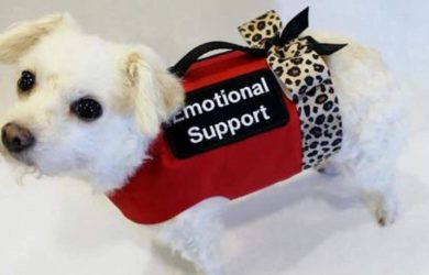 How Do Emotional Support Animals Help?