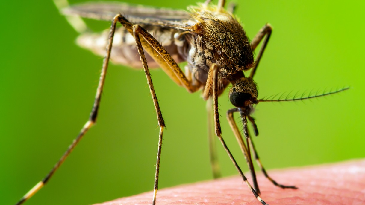 West Nile Virus: Causes, Symptoms, and Treatments